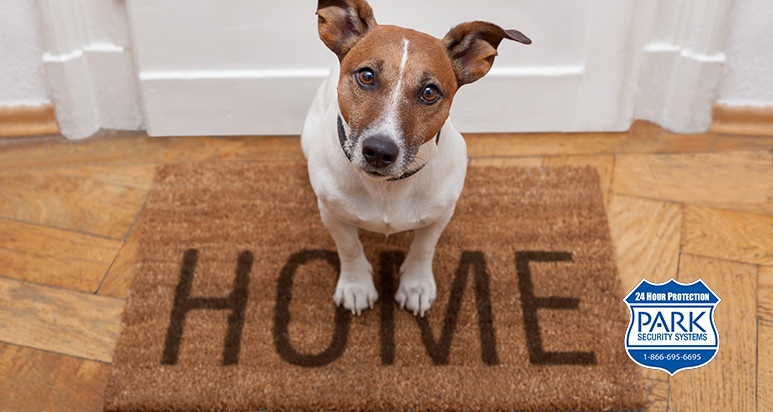Dogs compared to home security systems